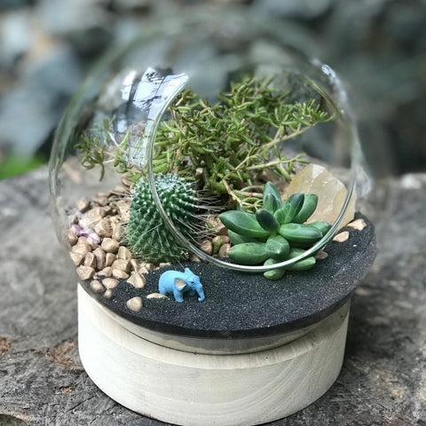 Gardens by the Bay - Plant Collection - The Mini Garden Series - The Glass Bowl Type C