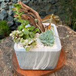 Gardens by the Bay - Plant Collection - The Mini Garden Series - Calm Series: Succulent in cube container with Deer figurine
