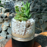 Gardens by the Bay - The Mini Garden Series - Father's Day Collection - Duke Series F