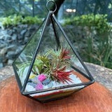 Gardens by the Bay - Plant Collection - The Mini Garden Series - Clarity Mini Series Type D