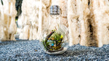 Gardens by the Bay - Nepenthes Glassball Collection - Glass Ball Terrarium Extra Large