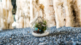 Gardens by the Bay - Nepethes and Glass Ball Collection - Glassball Terrarium Large