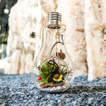 Gardens by the Bay - Nepethes and Glass Ball Collection - Glassball Terrarium Medium