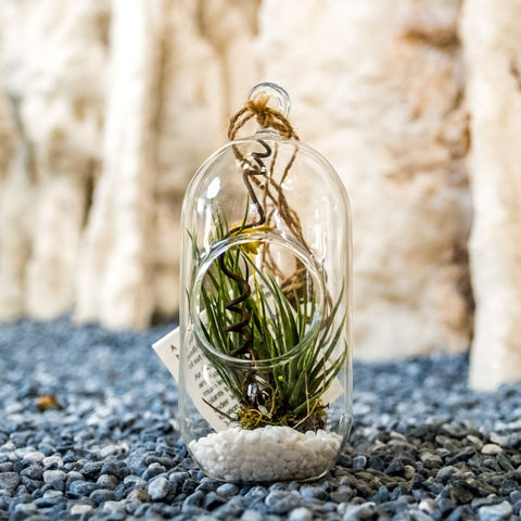 Gardens by the Bay - Nepethes and Glass Ball Collection - Glassball Terrarium Small
