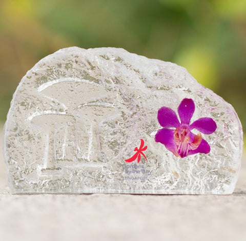 Gardens by the Bay - Supertree Preserved Orchid Collection - SUPERTREE PRESERVED DENDROBIUM ORCHID PAPERWEIGHT