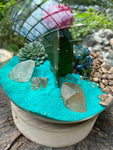 Gardens by the Bay - Plant Collection - The Mini Garden Series - The Glass Bowl Type A1