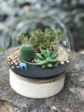 Gardens by the Bay - Plant Collection - The Mini Garden Series - The Glass Bowl Type C1