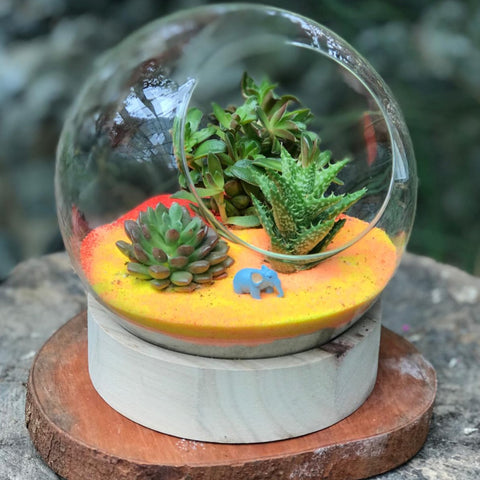 Gardens by the Bay - Plant Collection - The Mini Garden Series - The Glass Bowl Type E