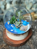 Gardens by the Bay - Plant Collection - The Mini Garden Series - The Glass Bowl Type F1