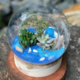 Gardens by the Bay - Plant Collection - The Mini Garden Series - The Glass Bowl Type F