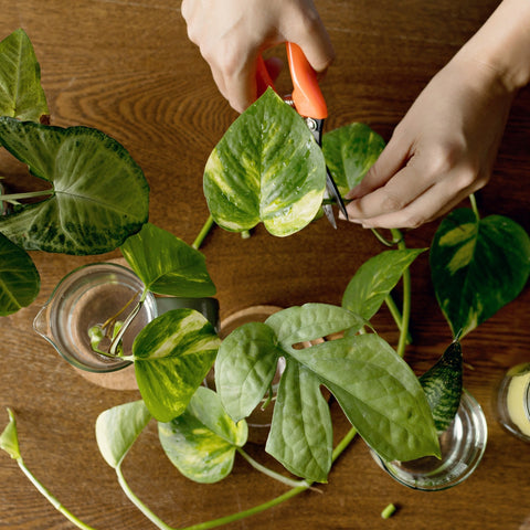 Grow with the Gardens - Plant Propagation