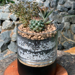 Gardens by the Bay - The Mini Garden Series - Father's Day Collection -Duke Series E