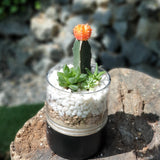 Gardens by the Bay - The Mini Garden Series - Father's Day Collection -Duke Series H