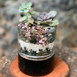 Gardens by the Bay - The Mini Garden Series - Father's Day Collection - Duke Series A