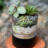 Gardens by the Bay - The Mini Garden Series - Father's Day Collection - Duke Series B