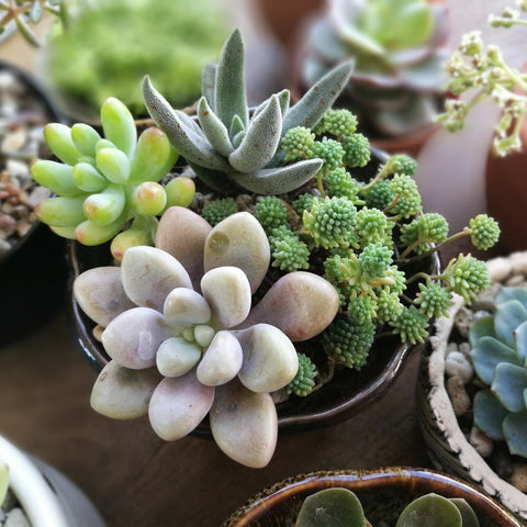 Grow with the Gardens - Creating a Succulent Garden Virtual Workshop