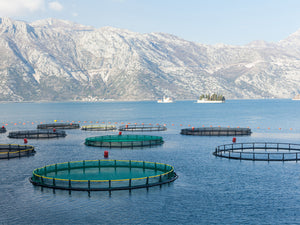 Reduce Your Carbon Footprint With Fish Farming
