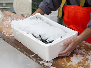Stop Paying for Ice: Glaze, The Frozen Fish Fraud