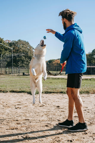 Man throwing ball for dog to catch in mid-air