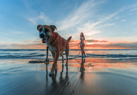 Dog at the beach with woman holding leash