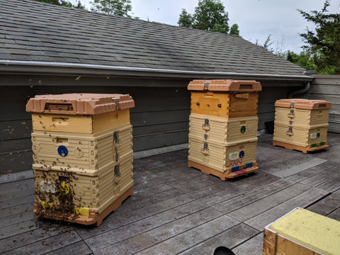 Apimaye bee hives with honey flow super