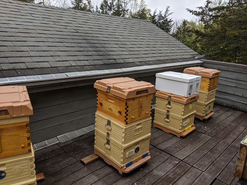 Apimaye hives with honey flow super