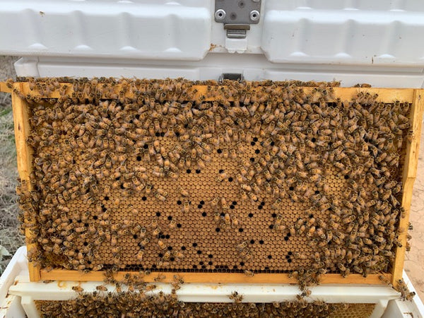 Excellent Brood Pattern