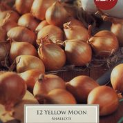 Shallot Yellow Moon VP350