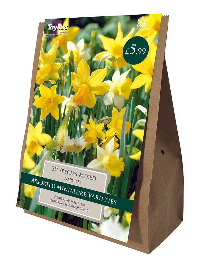 Narcissi Species Mixed Value Bag THINSN