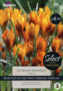 Crocus Orange Monarch SE034