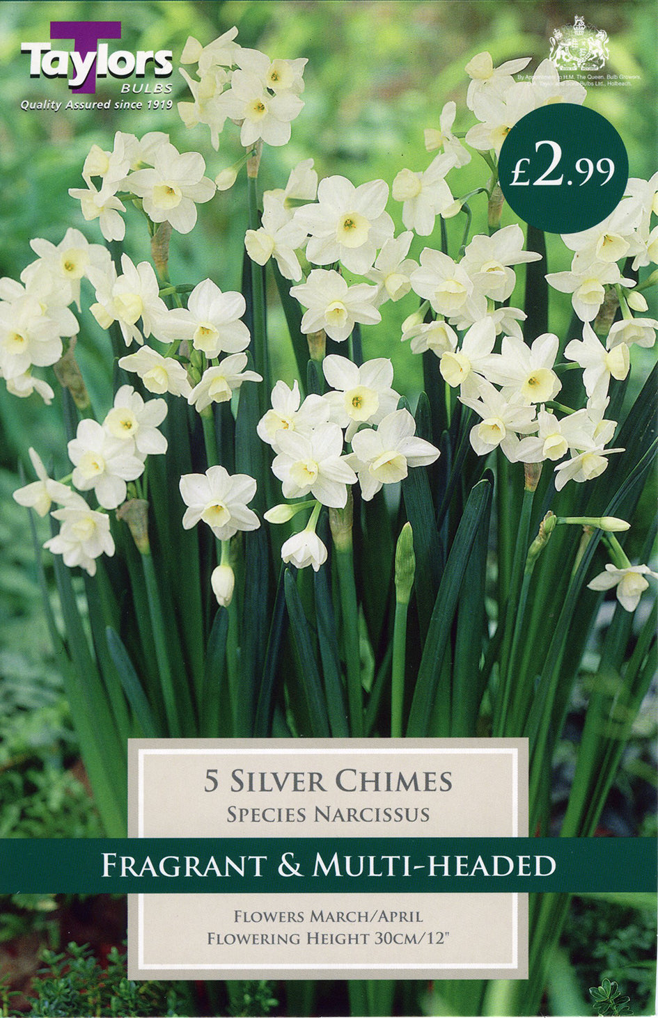 Narcissi Silver Chimes TP253