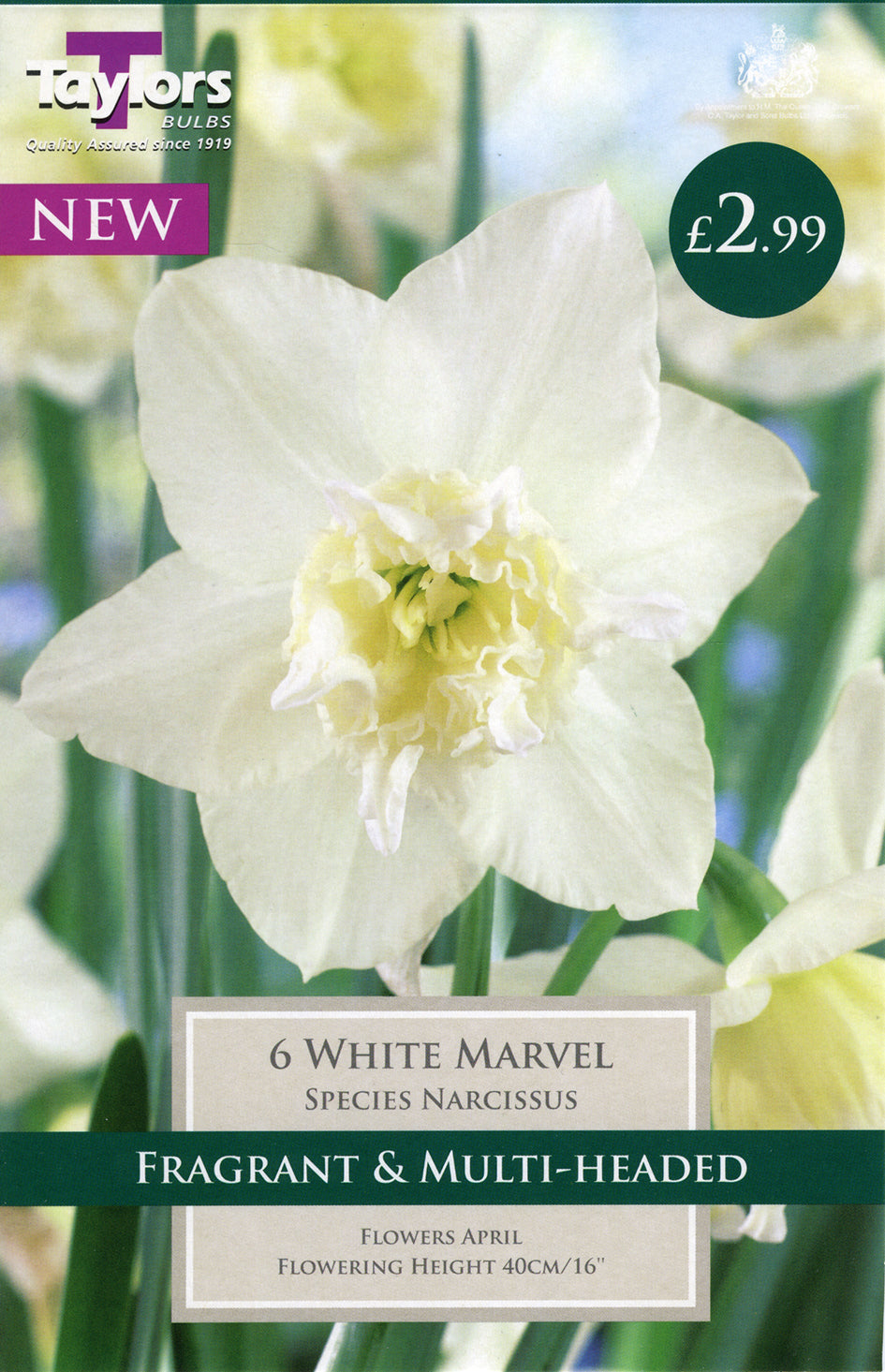 Narcissus White Marvel TP265