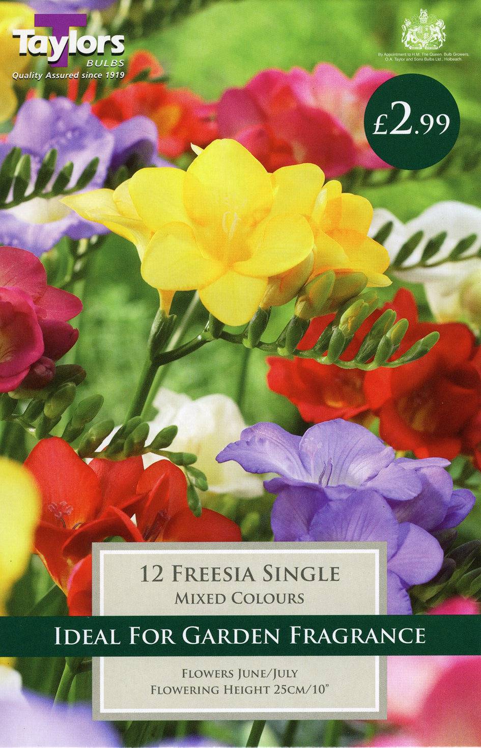 Freesias Single TP745