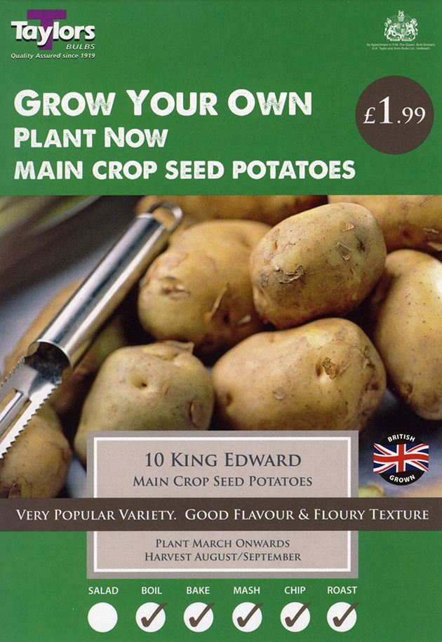 Potato Main Crop King Edward VP478