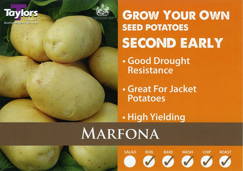 Potato Second Early Marfona VAC450