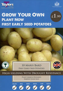 Potato First Early Maris Bard VP414