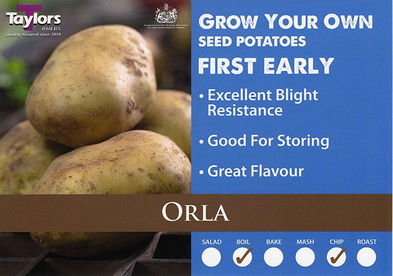 Potato First Early Orla VAC416