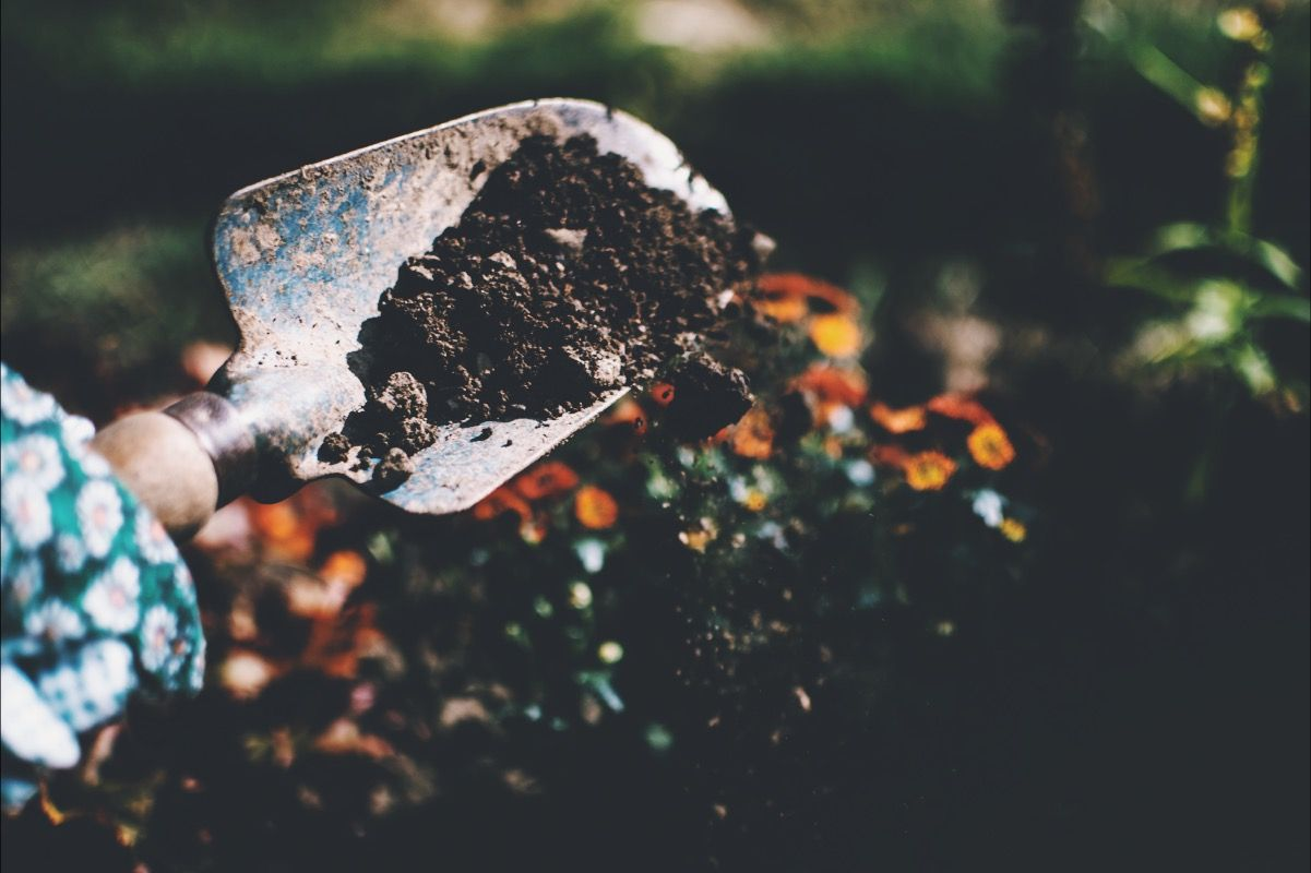 How to make a compost bin and save the planet