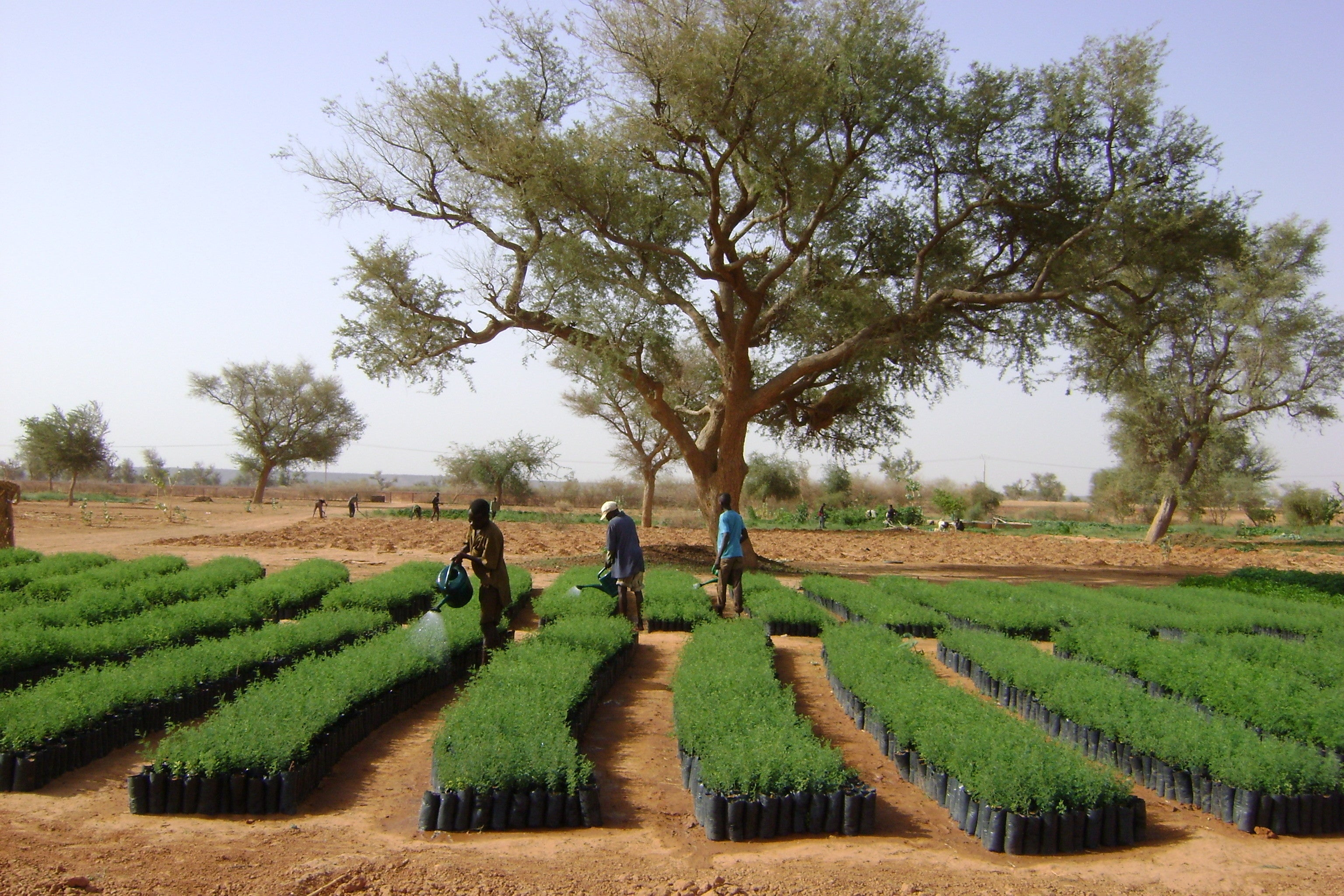 Tree Planting Initiative to Offset Carbon Footprint - Mielie Mailer