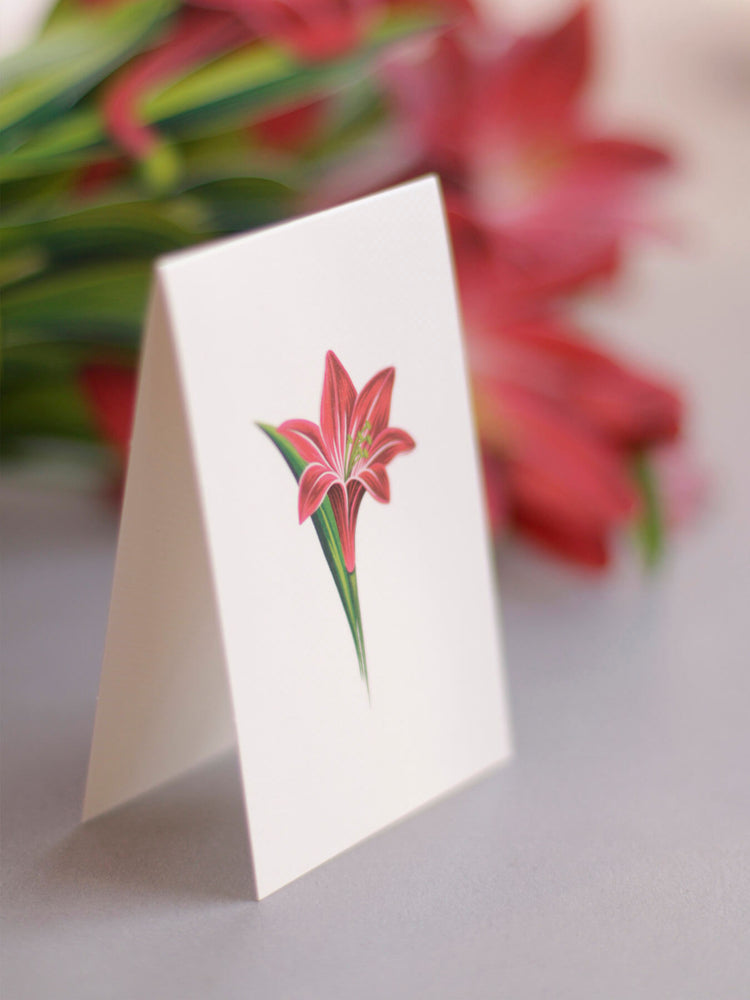 Personalized Gift Message Red Amaryllis