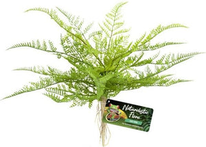 Zoo Med Naturalistic Flora Lace Fern 1 count - All Pets Store