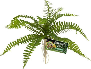 Zoo Med Naturalistic Flora Sword Fern 1 count - All Pets Store