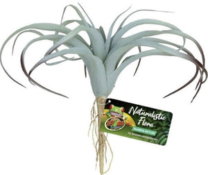 Zoo Med Naturalistic Flora Tillandsia Air Plant 1 count - All Pets Store