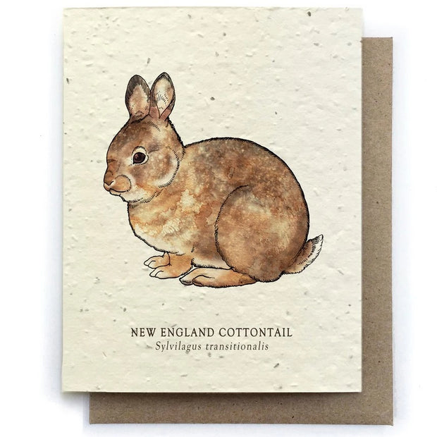 The Bower Studio - Cottontail Rabbit Greeting Cards - Plantable Seed Paper