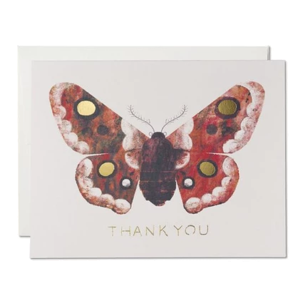 Red Cap Cards - Moth
