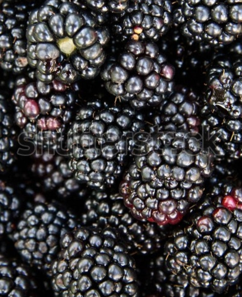 Seedless Blackberry Jam