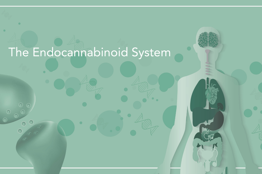 Illustration of the human Endocannabinoid System