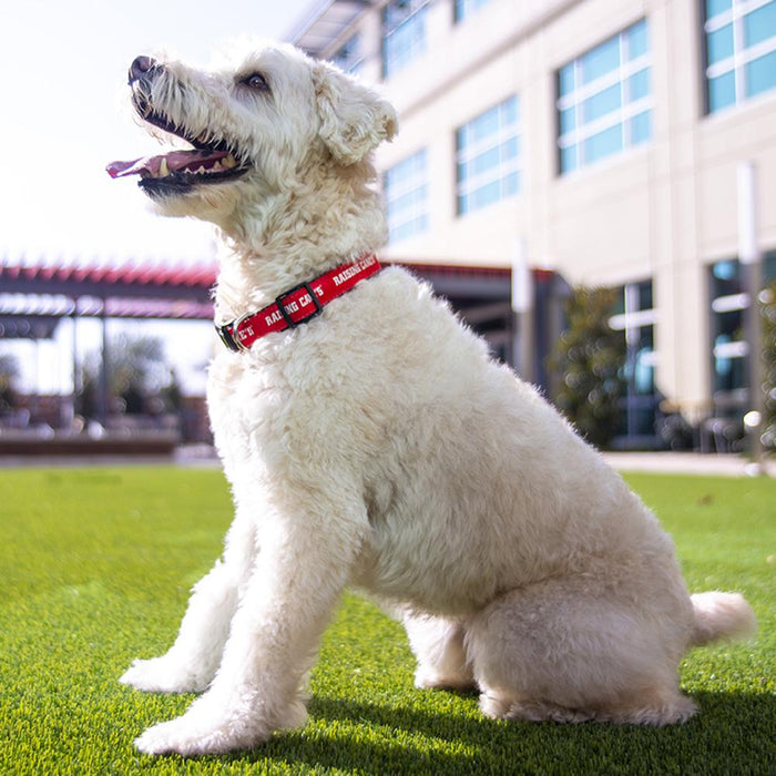 Red Classic Cane Pet Collar