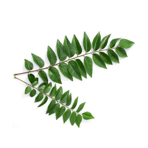 CURRY LEAVES (PER BAG)