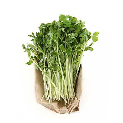 SNOWPEA SPROUTS